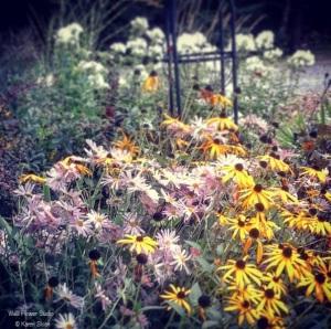 October front garden perennials