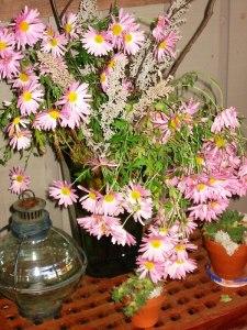 perennial mums from the autumn garden - WFS