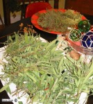 sage and thyme wfs blog