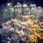 Wall Flower Studio perennial planting