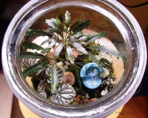 Fairy terrarium blue chair from above