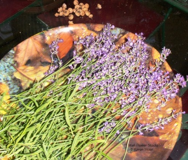 last-of-the-lavender-harvest