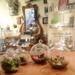 succulent-globe-terrariums-at-wall-flower-studio