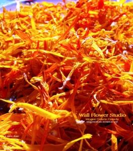 calendula-wfs-fb