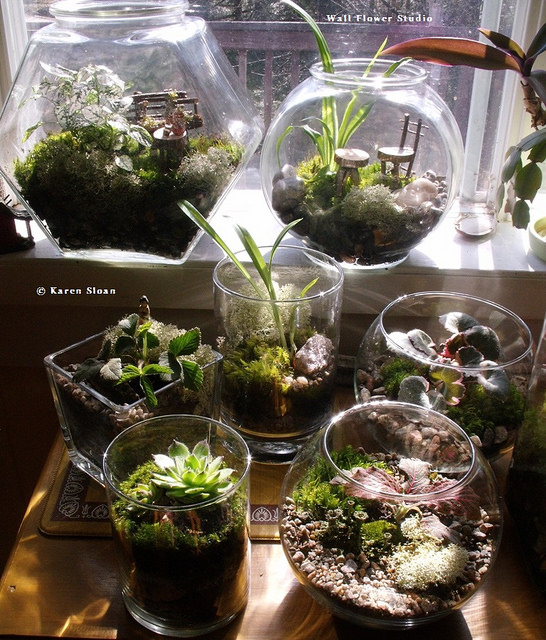 Terrariums as indoor gardening inspiration on #WordlessWednesday