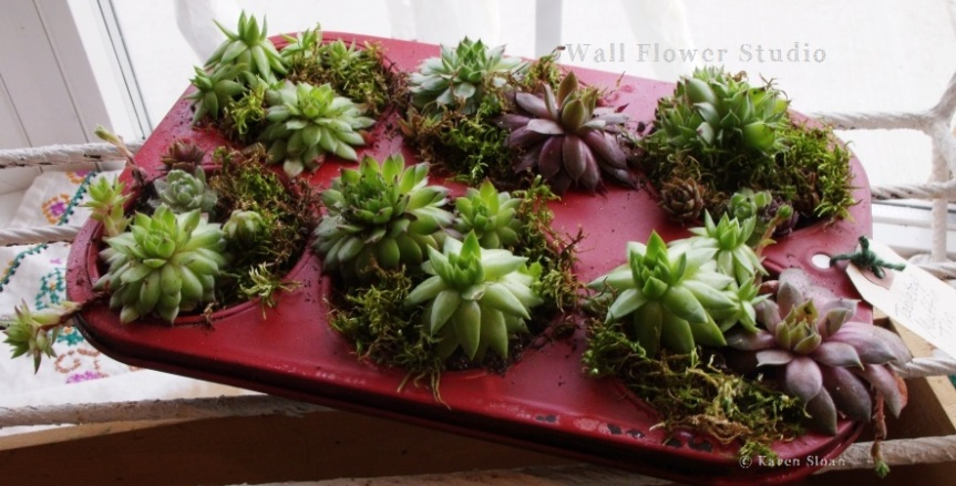Succulent container garden workshop at Wall Flower Studio