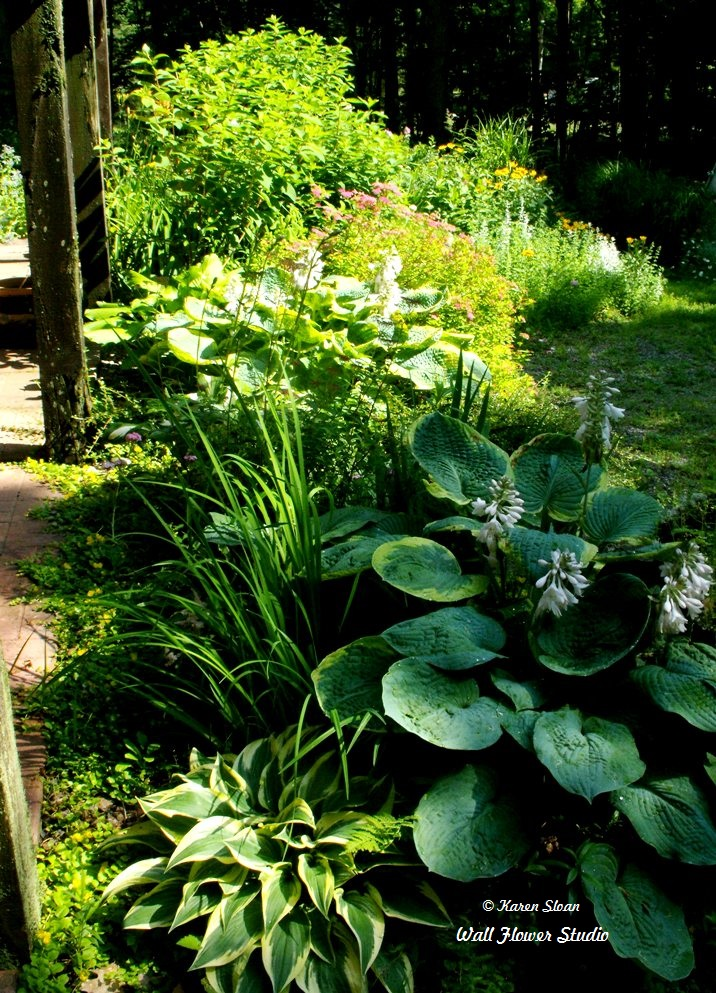 What's growing in the July garden on a WordlessWednesday