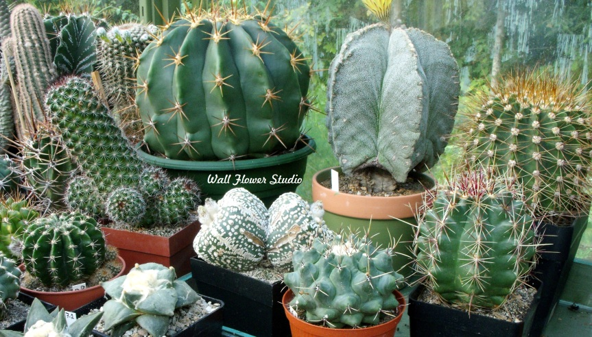 Cacti, succulents, and other houseplants basking in spring sunshine – Wordless Wednesday